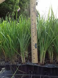 locate find wholesale plants plantant