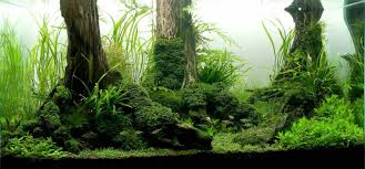 producing a nature aquarium for long term maintenance minifiss