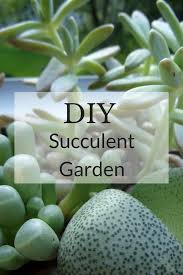 diy succulent garden living between the lines