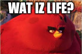 Angry Bird Meme - angry birds favourites by gameandshowlover on deviantart