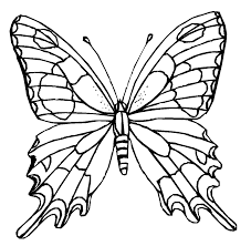 colours drawing wallpaper butterfly cartoone colour drawing hd