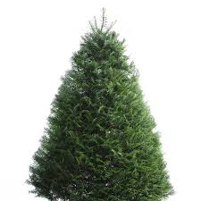 shop 6 7 ft fresh grand fir tree at lowes