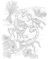 desert lizard coloring page realistic texas horned lizard coloring page from horned lizard