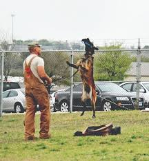 military working dogs guardians of the night article the