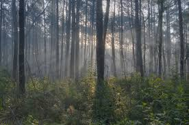 Texas forest images Sam houston national forest 6 minutes of vocals sasquatch jpg