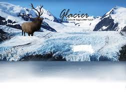 Alaska wildlife tours images Home alaska tour and cruise alaska wildlife tours alaska jpg