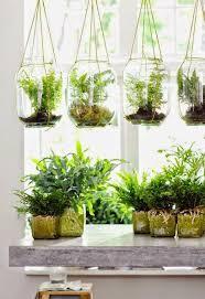 100 amazing hanging air plants decor ideas hanging air plants