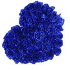 white and blue roses the million roses europe the million heart blue eternity
