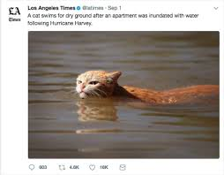 Mean Kitty Meme - photo of angry cat in harvey floodwaters sparks memes