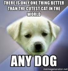 Meme Generator Dog - than the cutest cat in the world any dog apathy dog meme generator