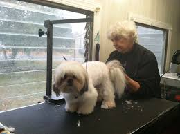 how to groom a belgian sheepdog millville pet stop grooming services