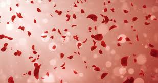 wedding anniversary backdrop animation of flying flower petals backdrop