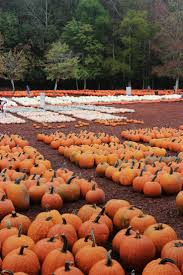 Central Point Pumpkin Patch Oregon by 351 Best Seasons Fall 5 Images On Pinterest