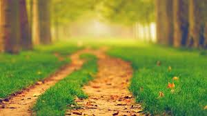 nature path blurred wallpapers hd desktop and mobile backgrounds