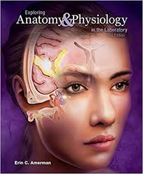 Answer Key For Anatomy And Physiology Lab Manual Exploring Anatomy U0026 Physiology In The Laboratory 3e