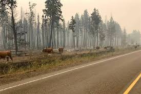 Wildfire Bc Area by 2017 Now Worst Wildfire Season In B C Ashcroft Cache Creek Journal