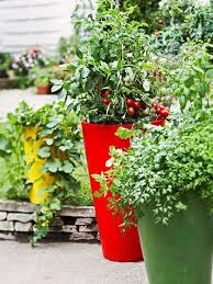 51 best container tomatoes images on gardening tips