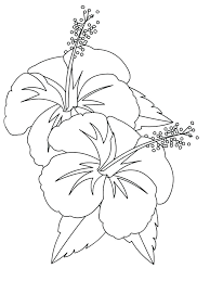 coloring pictures of hibiscus flowers hibiscus flower coloring page hibiscus flower coloring page hibiscus
