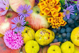 flowers and fruits real colors of autumn october european plants fruits and