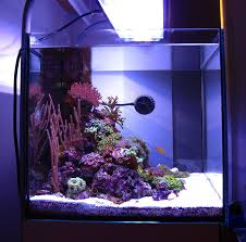 Nano Aquascaping Thinking U201cnegative U201d An Overlooked Aquascaping Aspect Opinion Reef