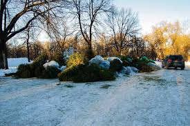 donate your christmas tree winnipeg free press