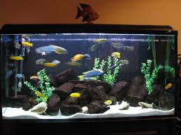 try out fish tank decorations room furniture ideas
