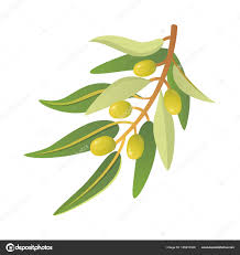 olive tree branch vector illustration in style stock