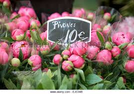 peonies for sale peonies for sale stock photos peonies for sale stock images alamy