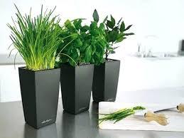 indoor plant containers u2013 eatatjacknjills com