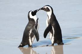 15 interesting penguin facts bird trivia
