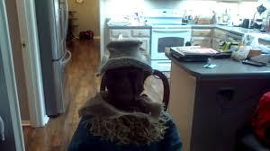 scarecrow halloween prop my spirit halloween sitting scarecrow prop youtube