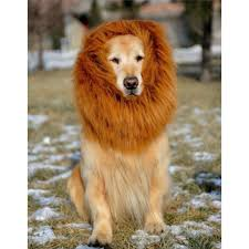 lion dogs pet costume dog lion wigs mane hair festival party fancy dress