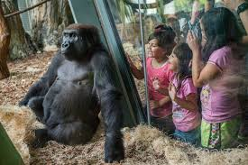 Lights At Lincoln Park Zoo by Lincoln Park Zoo 8 Reasons To Love It Chicago Tribune