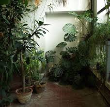 4912 best plants images on pinterest plants houseplants and