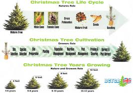 leeds christmas tree centre adel west yorkshire ls16 8hf our