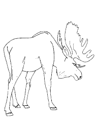 free moose coloring pages preschool moose free animal coloring