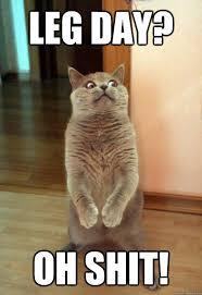 Leg Day Meme - leg day oh shit cat meme cat planet cat planet