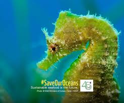 wallpaper online page wwf malaysia