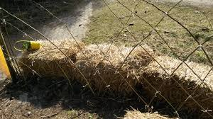 help me design my living fence fencing forum at permies
