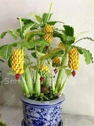 mini plants online buy wholesale tree plant from china tree plant wholesalers