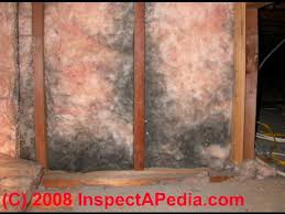 Should I Insulate My Interior Walls Mold In Fiberglass Insulation Fiberglass Moldy Fiberglass