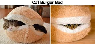 Meme Burger - cat burger bed cat meme cat planet cat planet