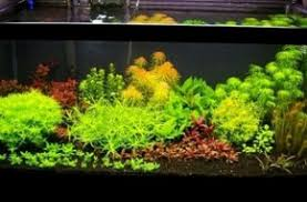 Aquascaping Guide Planted Tank Equipment And Supplies For Beginnnersaquathusiast
