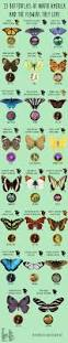 best 25 types of bees ideas on pinterest different types of