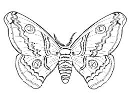 butterflies and insects coloring pages 21 butterflies and