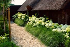 landscaping with ornamental grasses hydrangea grasses and shrub
