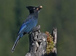 Washington birds images Audubon selling 2014 birds of eastern washington calendar the jpg