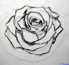 photos easy sketches in roses drawing art gallery