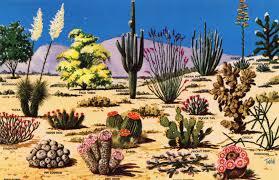 native plants of africa some beautiful native plant life in arizona album on imgur