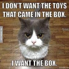 Funny Meme Cat - funny cat pictures meme
